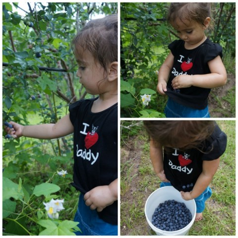 Andie Picking Blueberries