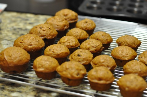 Pumpkin Chocolate Chip Muffinsrecipe