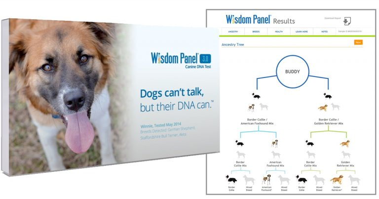 amazon  wisdom panel 3 0 breed identification dna test kit